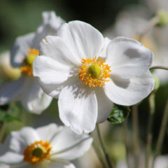 Lifestyle – Flower closeup